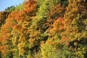 Hvorfor skifter bladene farge om høsten?