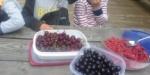 Mye bær på bærfest.
